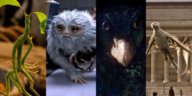 The Creatures in the 'Fantastic Beasts'